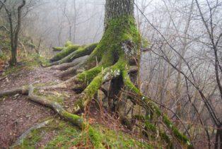 MaurerWald Dez15 044 314x211 - Der neolithische Steinbruch im Maurer Wald