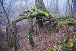 MaurerWald Dez15 050 314x210 - Der neolithische Steinbruch im Maurer Wald