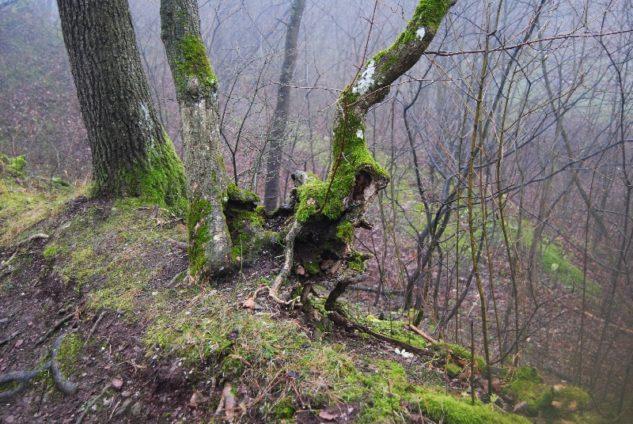 MaurerWald Dez15 052 633x424 - Der neolithische Steinbruch im Maurer Wald