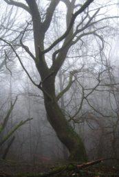 MaurerWald Dez15 056 173x258 - Der neolithische Steinbruch im Maurer Wald