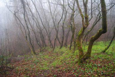MaurerWald Dez15 057 385x258 - Der neolithische Steinbruch im Maurer Wald