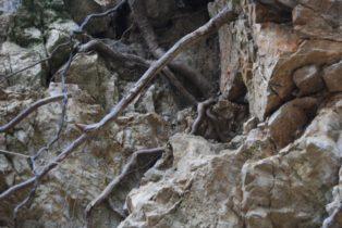 MaurerWald Dez15 067 314x210 - Der neolithische Steinbruch im Maurer Wald