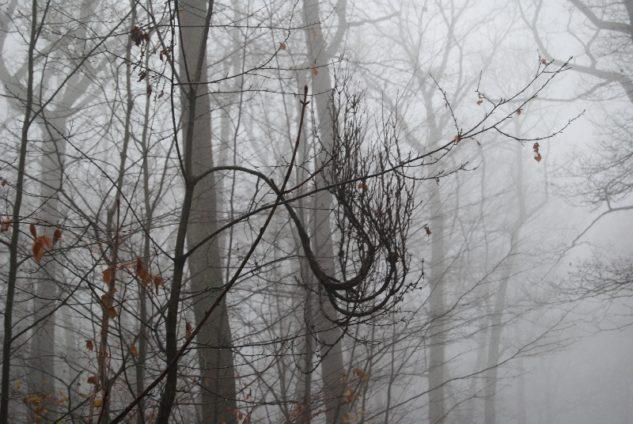 MaurerWald Dez15 078 633x424 - Der neolithische Steinbruch im Maurer Wald