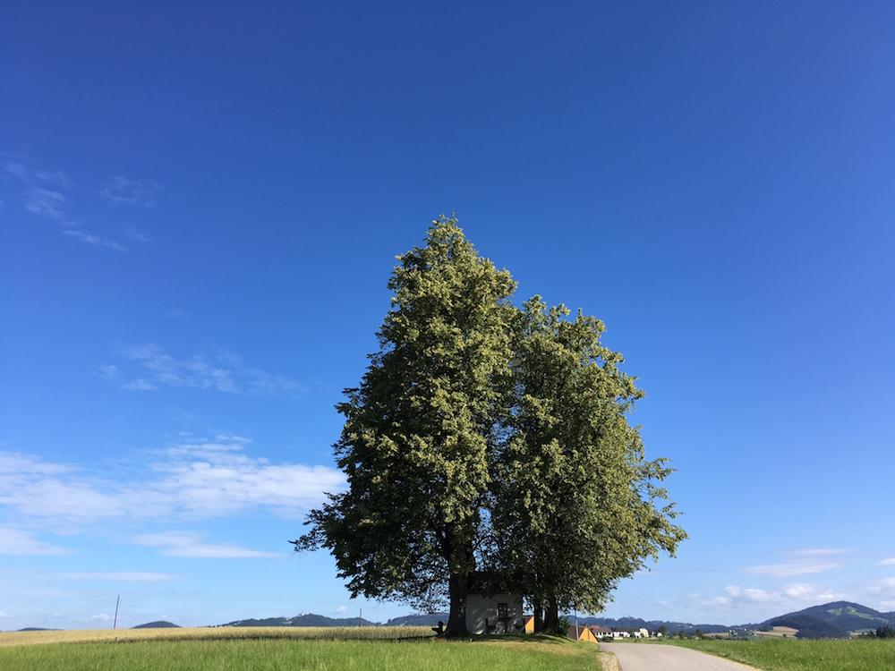 LindenBadKreuzen - Waldzitat
