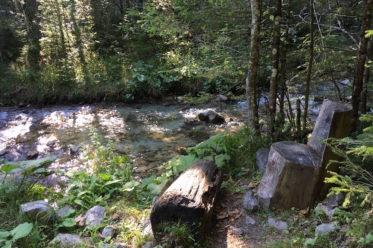 BruendlwegAllEinSeinsmall 373x248 - Waldzitat