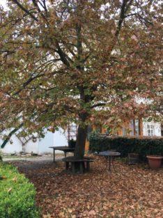 redemptoristenkloster 005 234x313 - Mystische Kraftplätze in und um Eggenburg