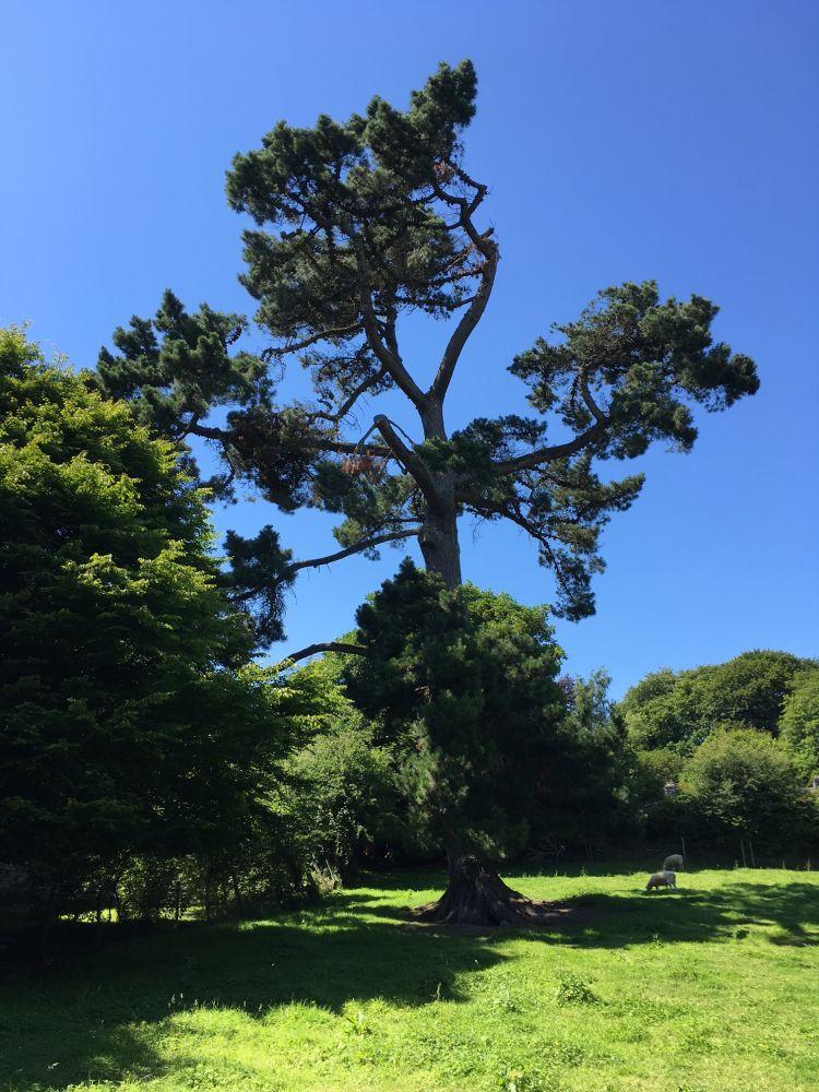Trees 001 - Tree Poem - Baumgedicht