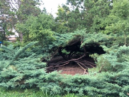 Trees 004 444x333 - Tree Poem - Baumgedicht