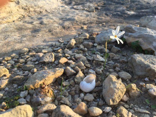 MaltaGozo Donnerstag 023 633x475 - Auf Göttinnenspuren in Malta & Gozo - Rückblick 1/3: Land und Leute