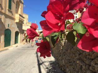 MaltaGozo Donnerstag 078 314x236 - Auf Göttinnenspuren in Malta & Gozo - Rückblick 1/3: Land und Leute
