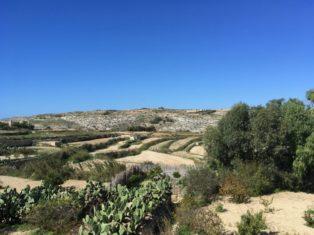 MaltaGozo Mittwoch 050 314x235 - Auf Göttinnenspuren in Malta & Gozo - Rückblick 1/3: Land und Leute