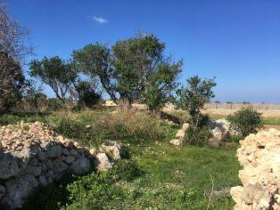 MaltaGozo Santa Verna 068 314x236 - Auf Göttinnenspuren in Malta & Gozo - Rückblick 2/3: die Tempel