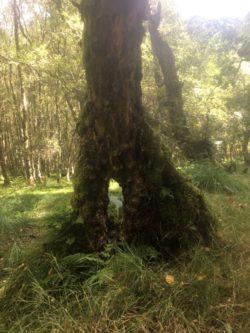 img 3573 250x333 - Glendalough: Besuch im Tal der zwei Seen - mit dem Käsehobel in Irland