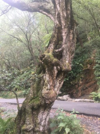 img 3574 341x455 - Glendalough: Besuch im Tal der zwei Seen - mit dem Käsehobel in Irland
