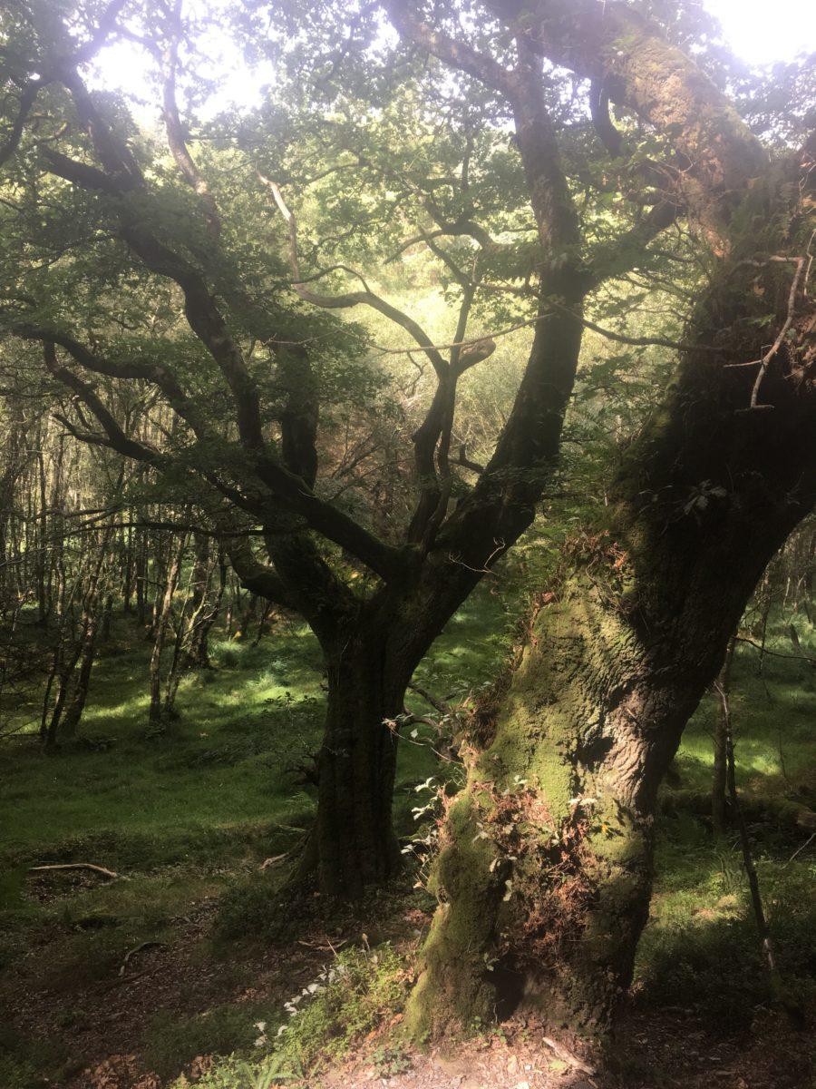 img 3580 1 - Glendalough: Besuch im Tal der zwei Seen - mit dem Käsehobel in Irland