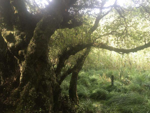 img 3585 606x455 - Glendalough: Besuch im Tal der zwei Seen - mit dem Käsehobel in Irland