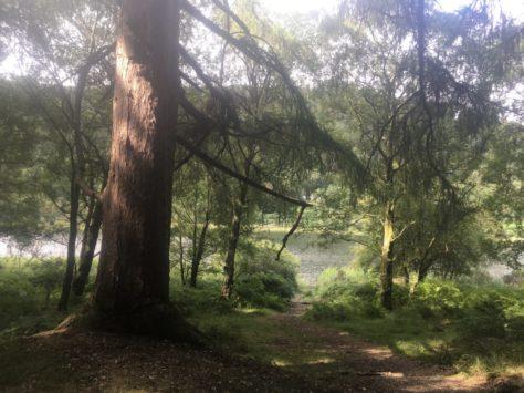 img 3595 474x355 - Glendalough: Besuch im Tal der zwei Seen - mit dem Käsehobel in Irland