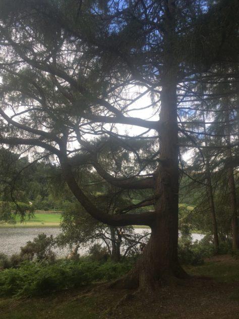 img 3596 474x631 - Glendalough: Besuch im Tal der zwei Seen - mit dem Käsehobel in Irland