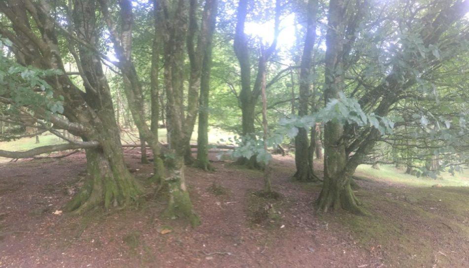 img 3606 951x545 - Glendalough: Besuch im Tal der zwei Seen - mit dem Käsehobel in Irland