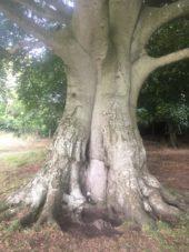 img 4457 170x227 - Chalice Well, eine bezaubernde Kapelle und ein magischer Garten - mit dem Käsehobel in England