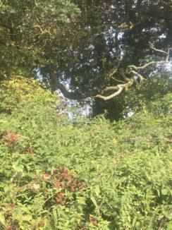 img 4537 244x326 - Chalice Well, eine bezaubernde Kapelle und ein magischer Garten - mit dem Käsehobel in England