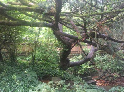 img 4553 433x324 - Chalice Well, eine bezaubernde Kapelle und ein magischer Garten - mit dem Käsehobel in England