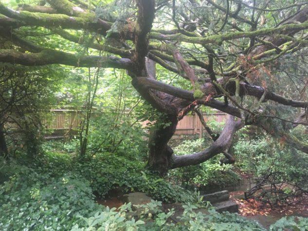 img 4553 633x474 - Chalice Well, eine bezaubernde Kapelle und ein magischer Garten - mit dem Käsehobel in England