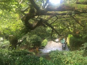 img 4561 303x227 - Chalice Well, eine bezaubernde Kapelle und ein magischer Garten - mit dem Käsehobel in England