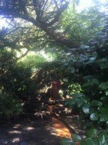 img 4565 159x213 - Chalice Well, eine bezaubernde Kapelle und ein magischer Garten - mit dem Käsehobel in England