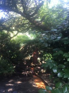 img 4565 234x313 - Chalice Well, eine bezaubernde Kapelle und ein magischer Garten - mit dem Käsehobel in England