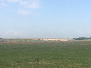 img 5035 314x235 - Stonehenge - mit dem Käsehobel in England
