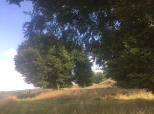 img 5036 315x235 - Stonehenge - mit dem Käsehobel in England