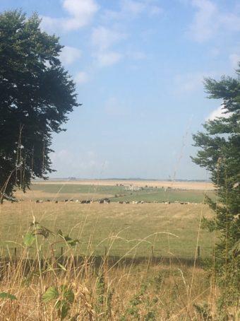 img 5042 340x454 - Stonehenge - mit dem Käsehobel in England