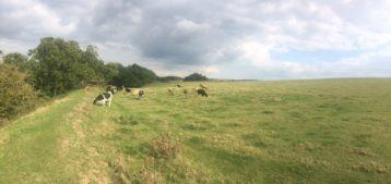 img 5148 358x169 - Maybe-Camelot und die 1.700jährige Eibe von Compton Dundon - mit dem Käsehobel in England