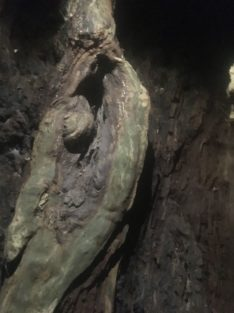 ComptonEngland2018 013 234x313 - Maybe-Camelot und die 1.700jährige Eibe von Compton Dundon - mit dem Käsehobel in England
