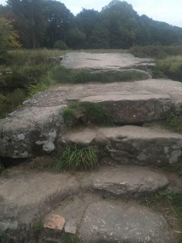 Dartmoor Daemmerfahrt England2018 063 597x796 - Dartmoorliebe, ein magischer Wald und Cream Tea - mit dem Käsehobel in England