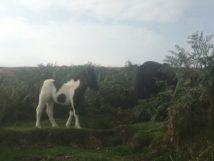 Dartmoor Montag England2018 003
