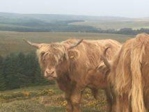 Dartmoor Montag England2018 004