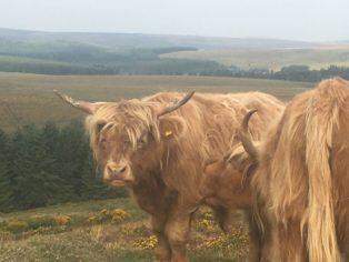 Dartmoor Montag England2018 004 314x236 - Dartmoorliebe, ein magischer Wald und Cream Tea - mit dem Käsehobel in England