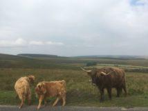 Dartmoor Montag England2018 009