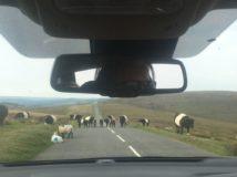 Dartmoor Montag England2018 011