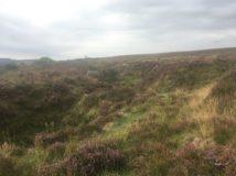 Dartmoor Montag England2018 031