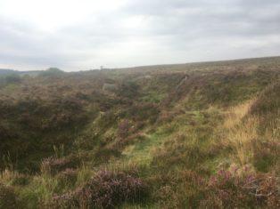 Dartmoor Montag England2018 031 314x235 - Dartmoorliebe, ein magischer Wald und Cream Tea - mit dem Käsehobel in England