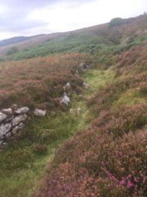 Dartmoor Montag England2018 037