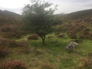Dartmoor Montag England2018 048
