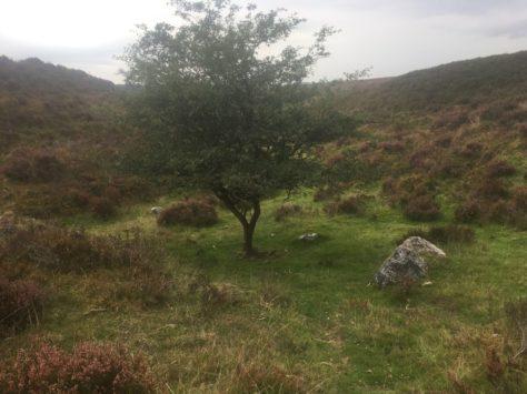 Dartmoor Montag England2018 048 474x355 - Dartmoorliebe, ein magischer Wald und Cream Tea - mit dem Käsehobel in England