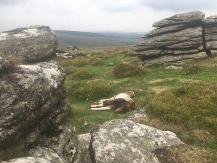 Dartmoor Montag England2018 068