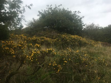 Dartmoor WistmansWood England2018 002