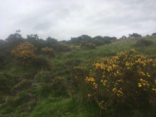 Dartmoor WistmansWood England2018 008 314x236 - Dartmoorliebe, ein magischer Wald und Cream Tea - mit dem Käsehobel in England