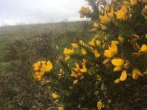 Dartmoor WistmansWood England2018 012